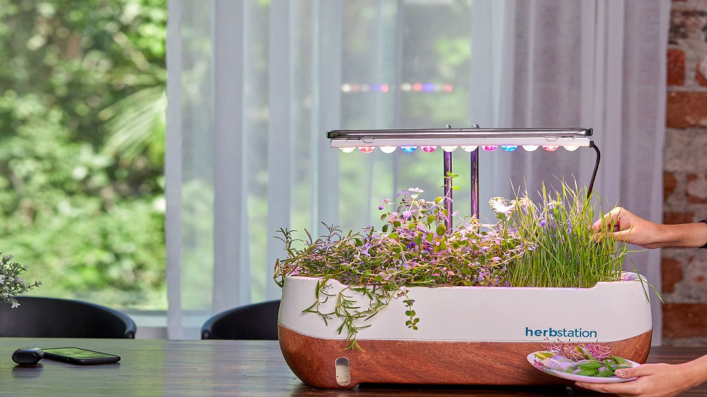 Microgreen Franchises: Turning Your Gardening Skills into a Full-Fledged Business