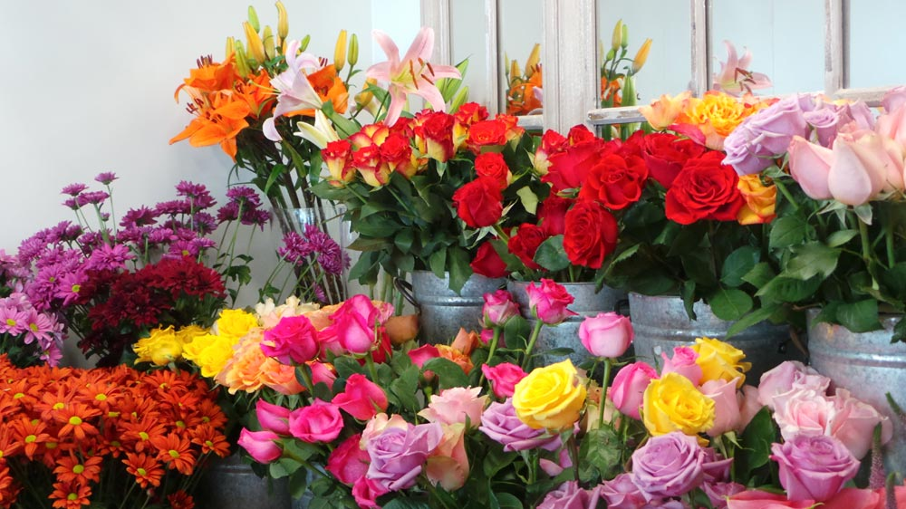 Image result for Right Florist PJ""