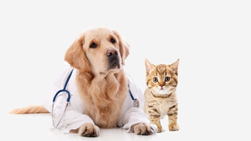 A Guide To Start Your Own Veterinary Clinic