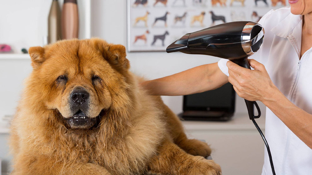 Few Things To Know Before Starting A Pet-Grooming Business