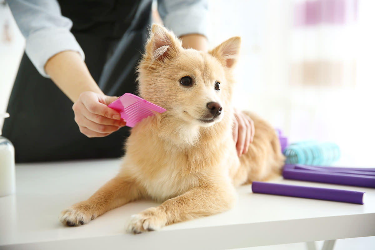 How To Make A Pet Grooming Business The Next Big Wellness Segment In 2019