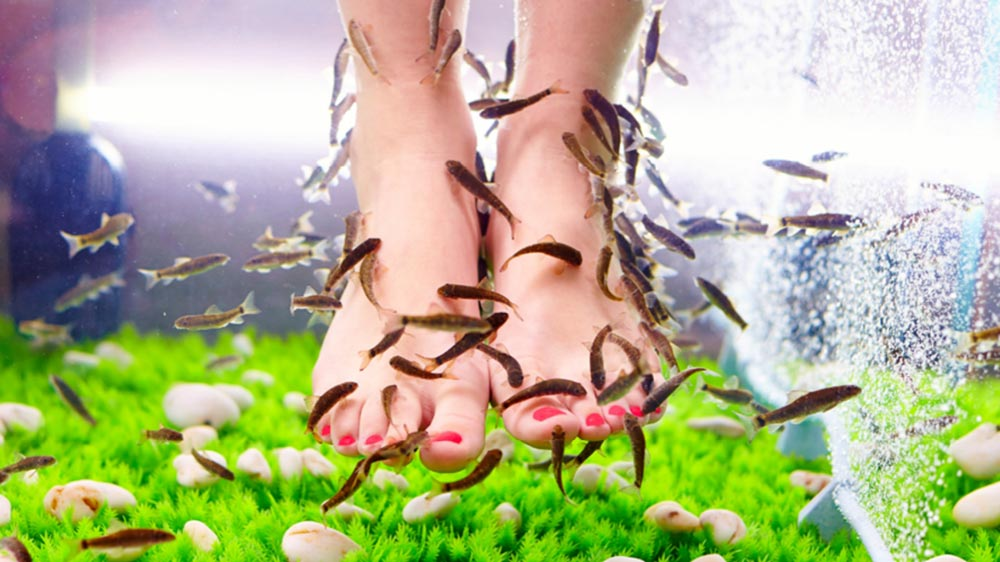 How To Start a Fish Pedicure Business