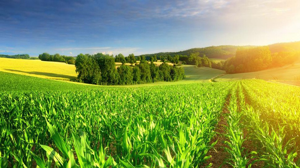 How Agri-tech has Enabled New Business Startup Ideas to Flourish