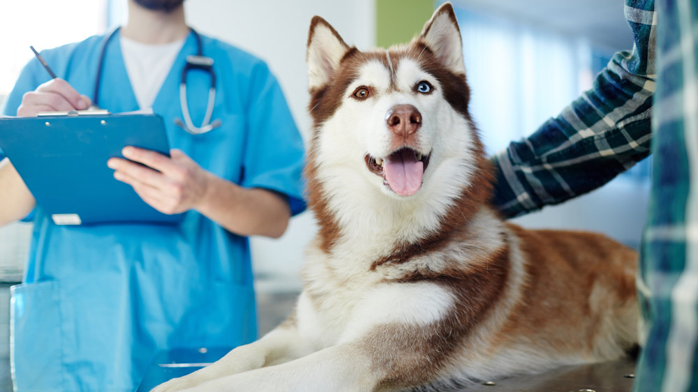 Why Pet-Care Is Considered As a Recession-Proof Industry