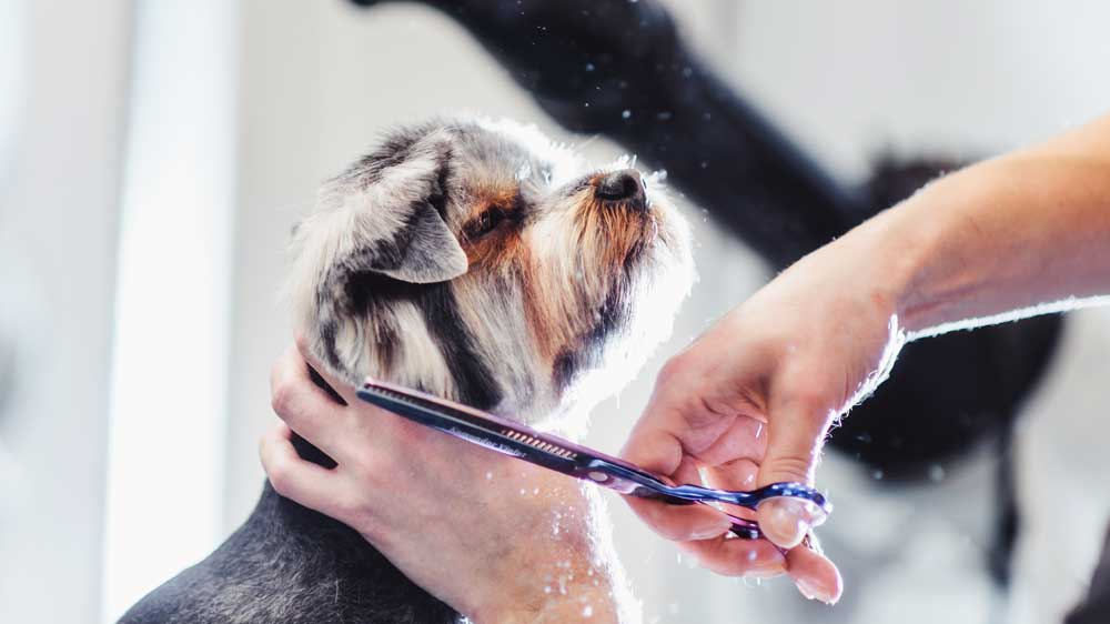 Pet Grooming Industry Takes a Furry Ride Upward