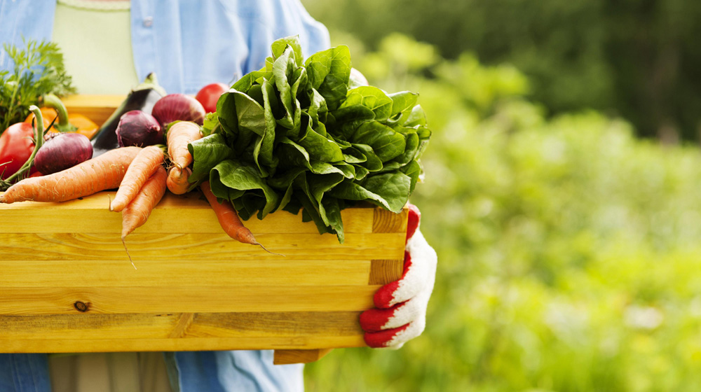 The Rising Demand of Organic Food Market
