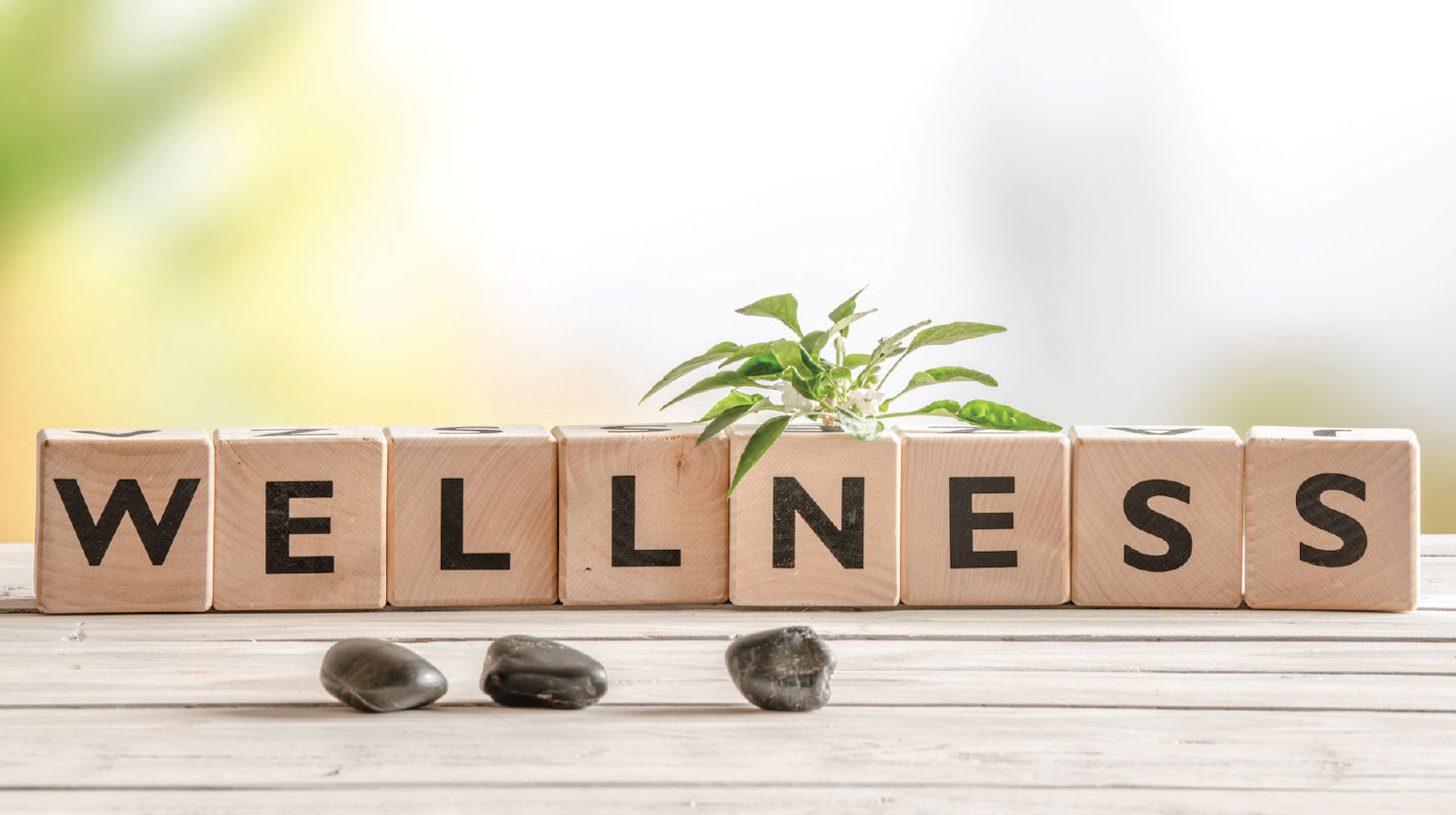 How to start a Wellness Business